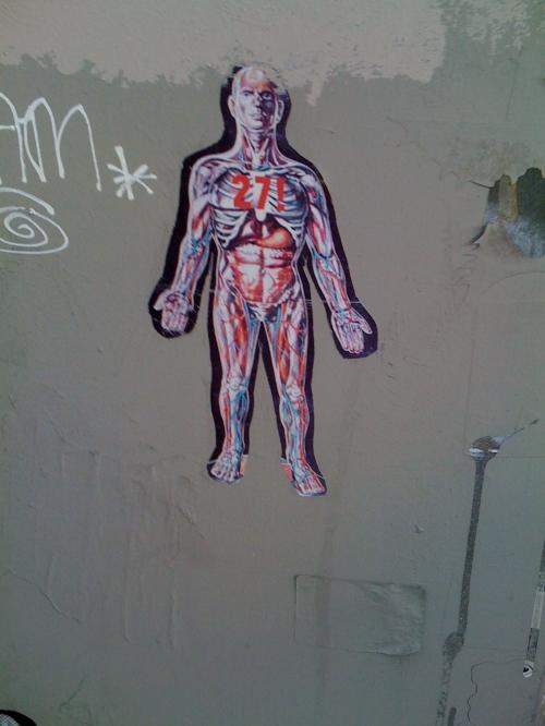 27! anatomy