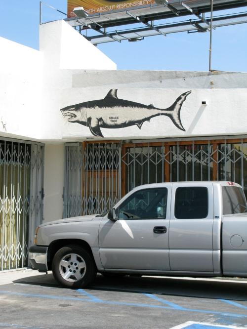 shark toof